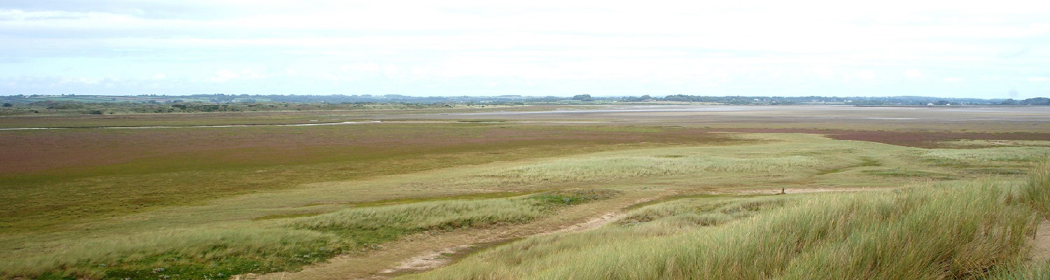 Saltmarsh transition from dune
