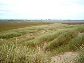 Saltmarsh transition from dune