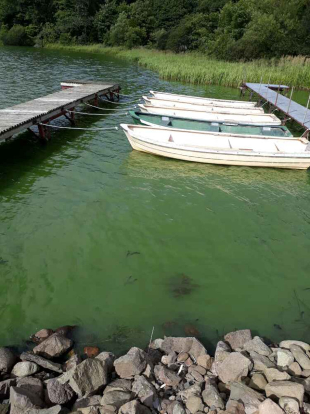 Cloudy cyanobacteria