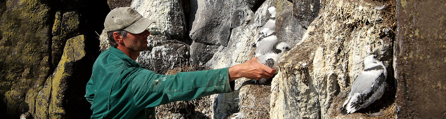 © Heather Lowther, CEH seabirds on cliff