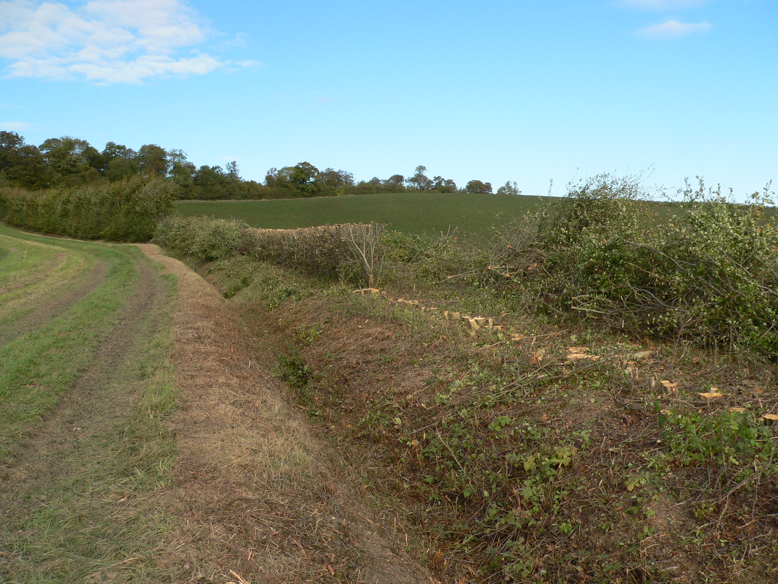 Hedgerow rejuvenation experiment, Wimpole Hall
