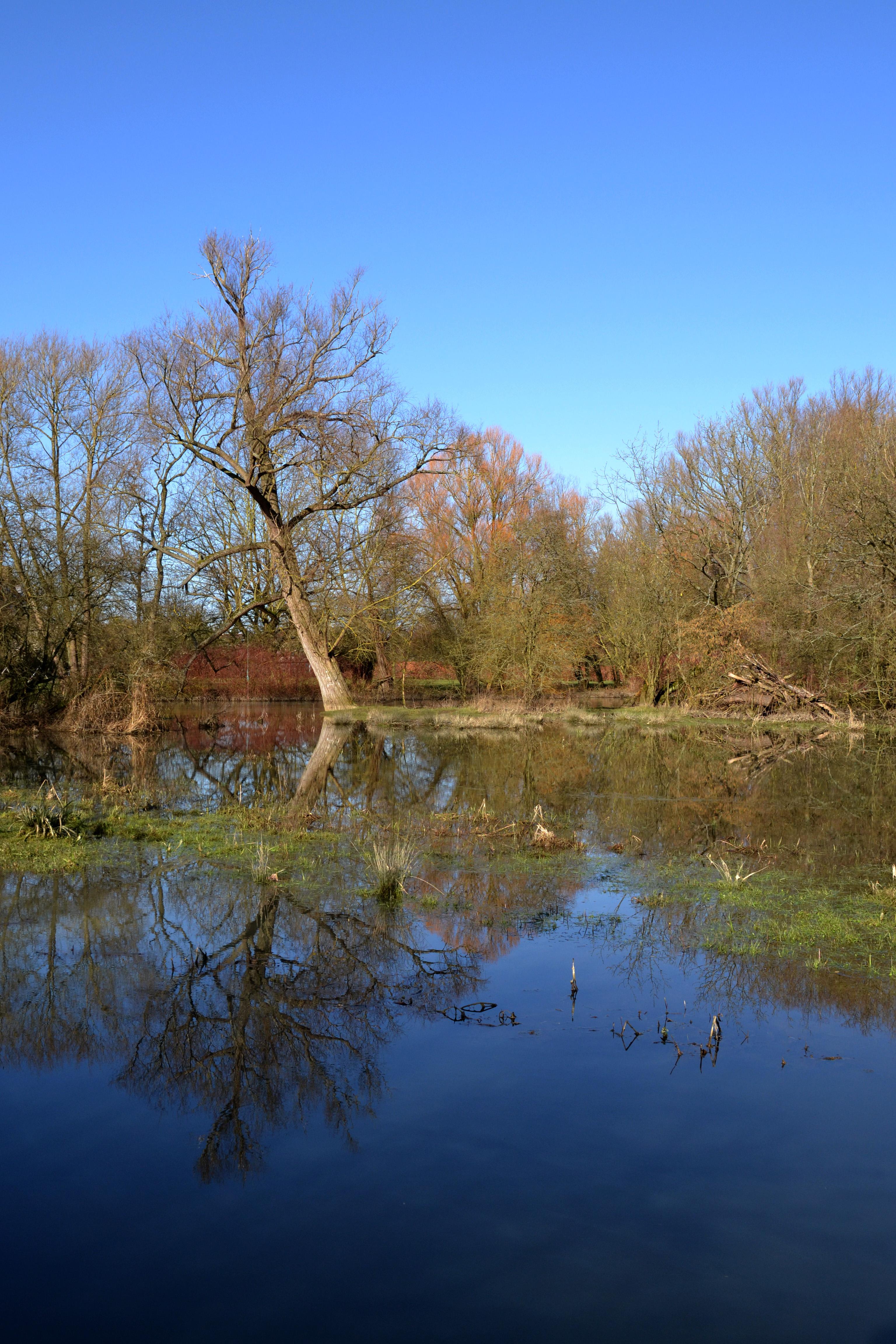 Oxford University Parks after a bit of wet weather Photo: Denise Pallett