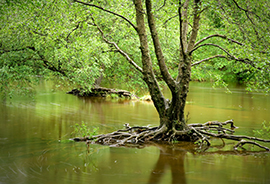 Flooded Woodland, Wales © Shutterstock