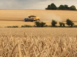 Sustainable Intensification - combine harvester in a wheat field